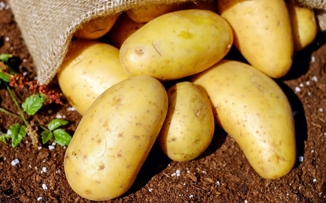 Heimatverein Kartoffelfest 2019