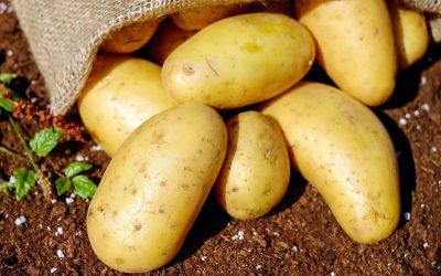 Heimatverein Nachlese Kartoffelfest 2019 – mit Bildern